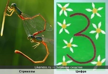 Момент из жизни насекомых и цифра 3