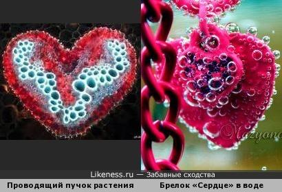 Сердечный привет от биологов