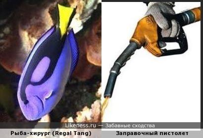 Рисунок на теле рыбы-хирурга напоминает заправочный пистолет