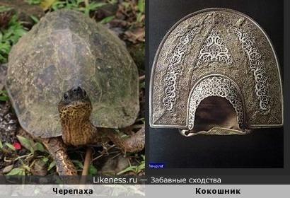 "Черепаха в ""кокошнике"""