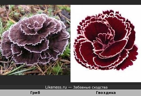 Гриб похож на цветок