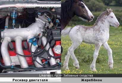 Ресивер двигателя автомобиля и жеребёнок