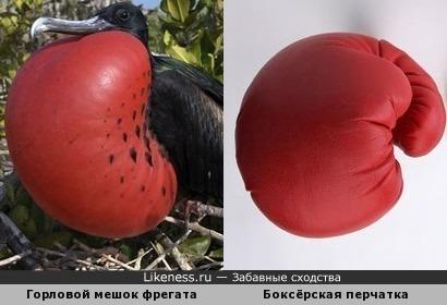 Красные боксёрские перчатки