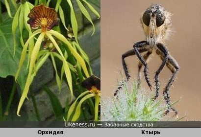 «Спрутики» (Орхидея и портрет ктыря)