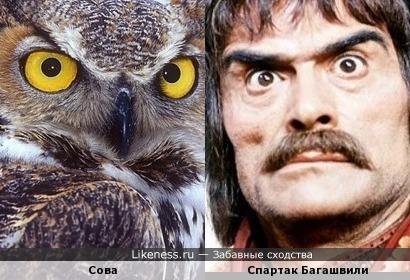 Сова и Спартак Багашвили