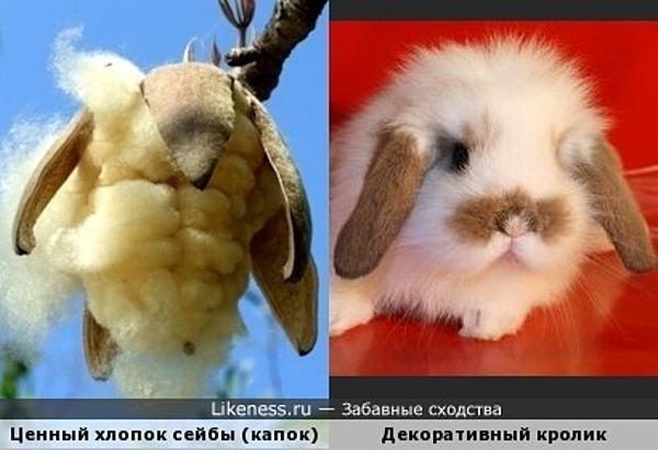 Волокна дерева-сейба и декоративный кролик