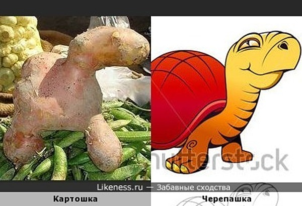 Эта картошка напоминает черепашку или динозаврика