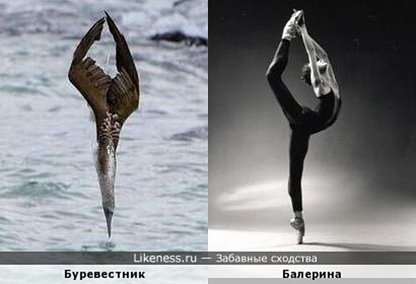 Буревестник и балерина