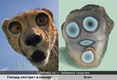 Гепард - агат