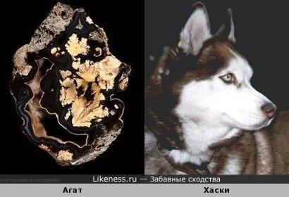 В этом агате увидела профиль собаки