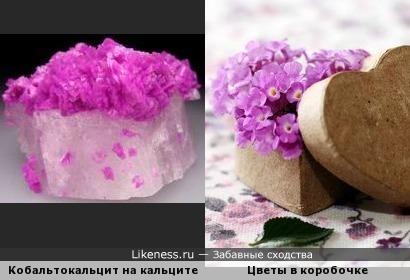 Розово-сиреневые цветы в коробках