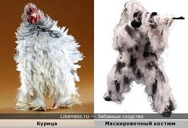 Курица в камуфляже