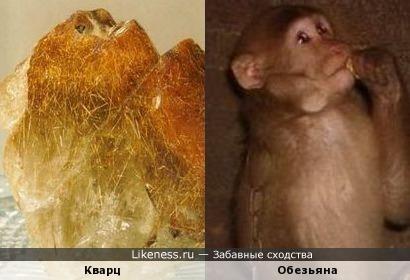 Кварц и обезьяна