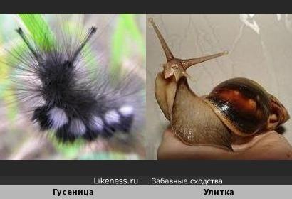 Гусеница превращается в улитку