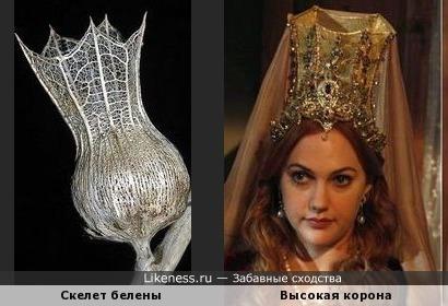 Скелет белены похож на высокую корону