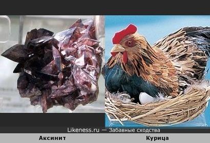 Этот аксинит напоминает курицу