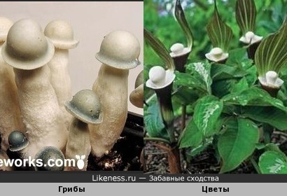 Белые шляпки