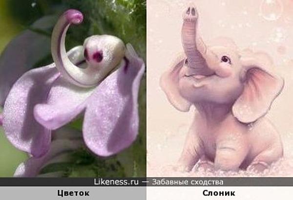 Цветок и слоник