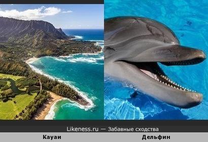 Кауаи и дельфин
