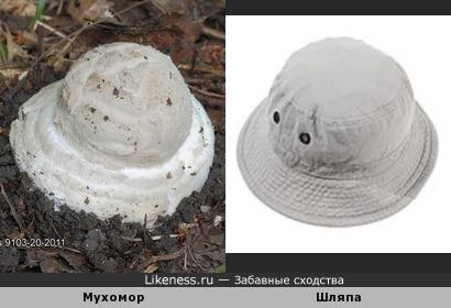 Мухомор похож на шляпу