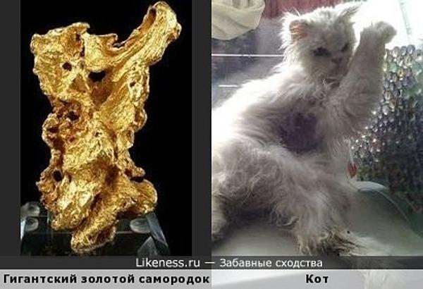 Этот гигантский золотой самородок напоминает кота