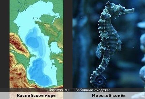 Каспийское море и морской конёк