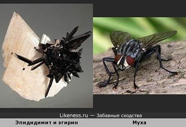 Две мухи