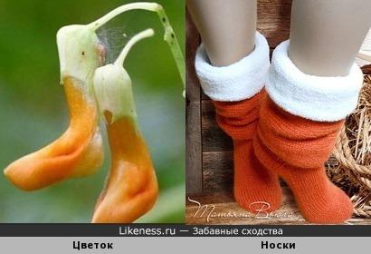 Цветочки-носочки