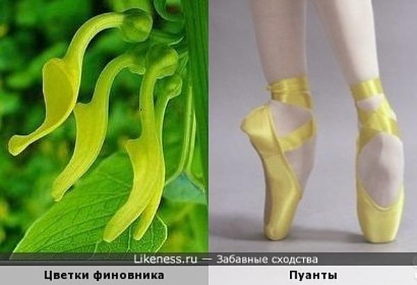 Жёлтые пуанты