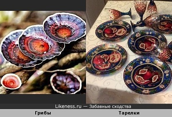 Грибы и тарелки