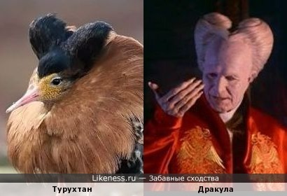 Турухтан-Дракула