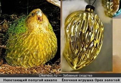 """Нелетающий попугай какапо и советская ёлочная игрушка """"Орех золотой большой"""""""