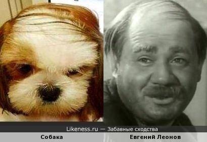 Евгений Леонов с собачкой