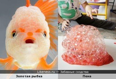 Рыбка-пузырятка