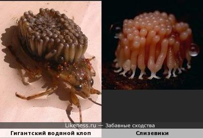 Самец с потомством на спине и слизевики