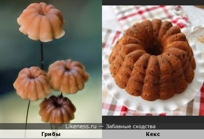 Эти грибочки похожи на маленькие кексики