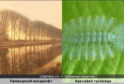 Отражение деревьев в воде и гусеница