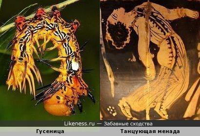 Гусеница - менада