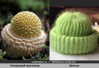 Незрелый мухомор напоминает шапочку