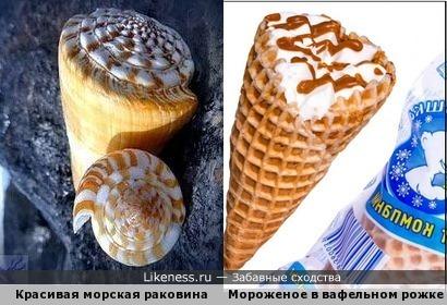Красивая морская раковина напоминает мороженое в вафельном рожке