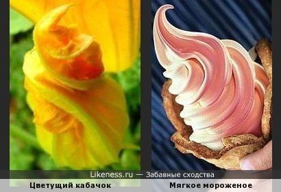 Этот цветок похож на мягкое мороженое
