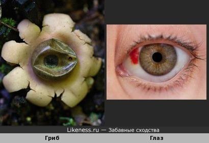 Есть глаза у грибов