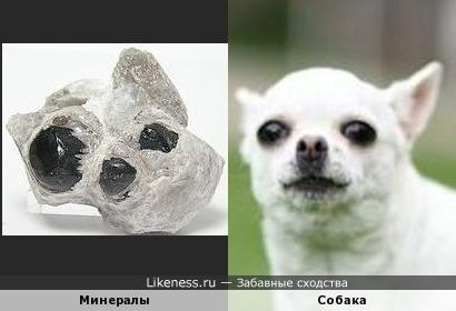 Минералы напоминают собачью морду