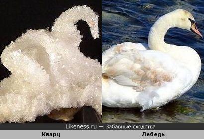 Кварцевый лебедь