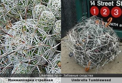 Скульптура Тима Тицеля «Зонтик-окунь», сделанная из 50 сломанных зонтов и маммиллярия стройная