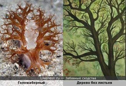 Голожаберный и дерево без листьев