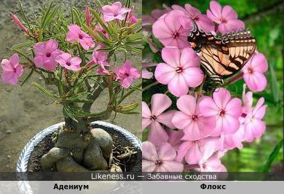 Цветки у этих цветов одинаковые