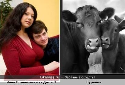 Инна Воловичева из Дома-2 похожа на Буренку