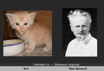 Кот похож на Троцкого