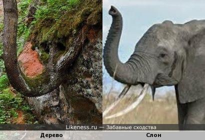 Дерево похоже на слона